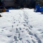 太陽光発電所の積雪による破損の修復事例